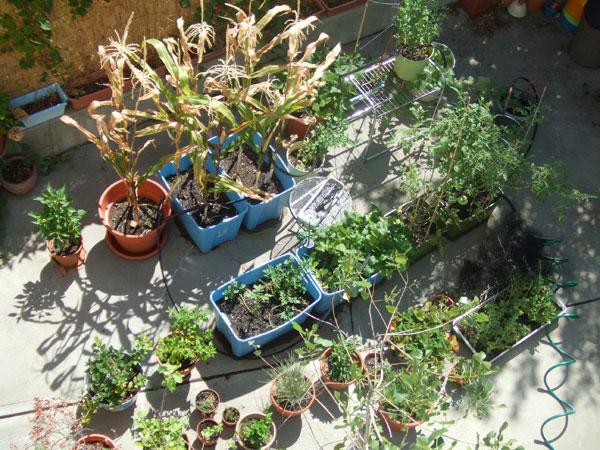 Garden-machine-2