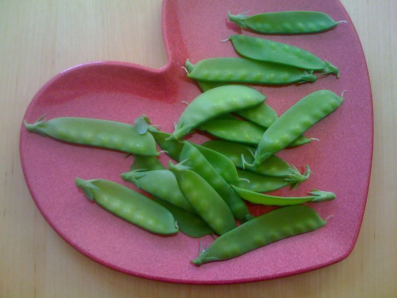 recently harvested snow peas from FarmTina