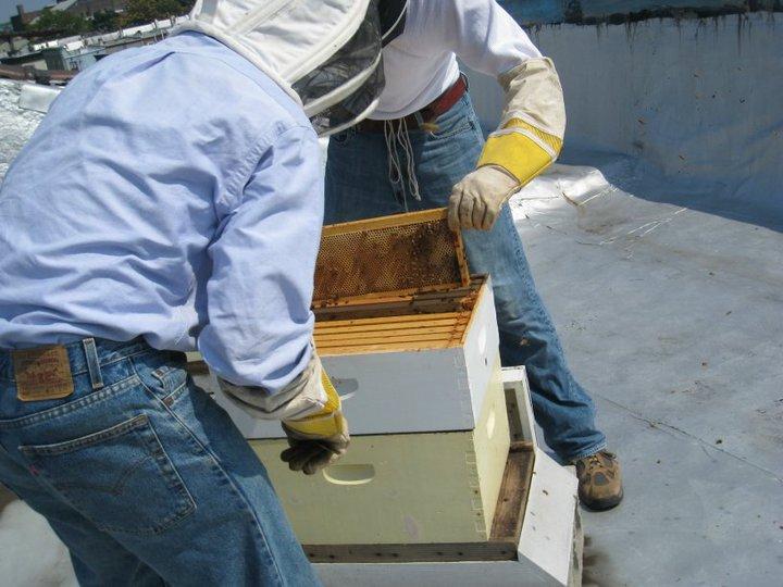 Brooklyn Beehive