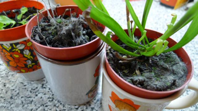 carnivorous-plant-fungus