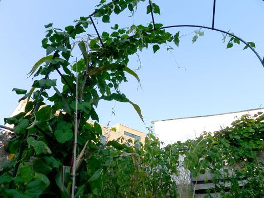 Hurricane-Irene-Garden