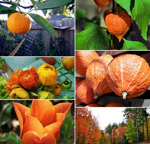 Farmtina-Tangerine-Tango