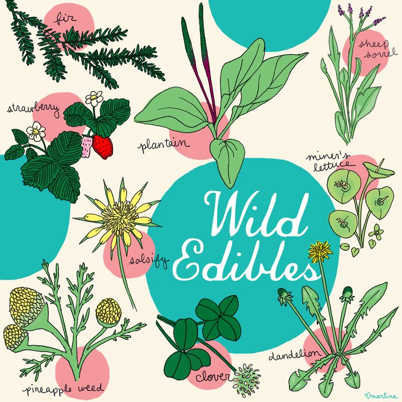 Edible-plants-2